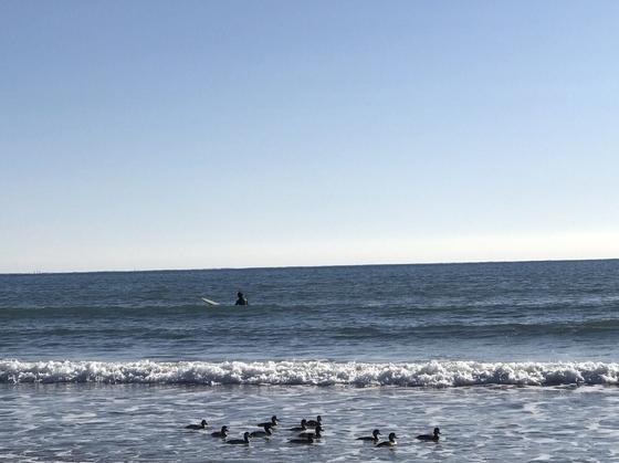 自然に癒される海辺