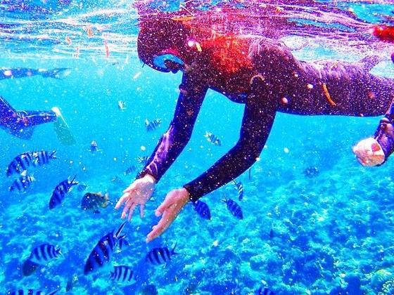沖縄の海とお魚
