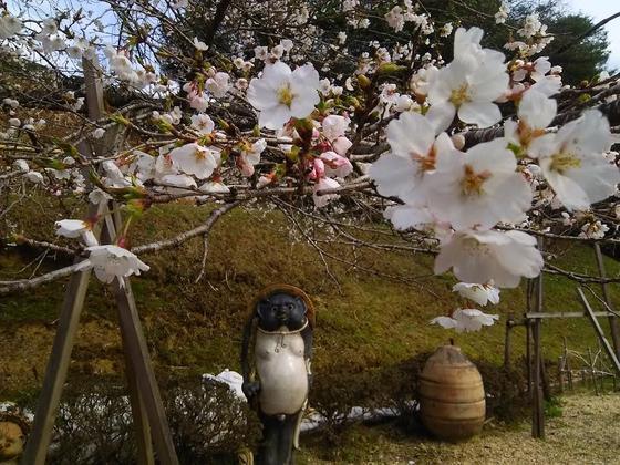 奥のお庭でお花見~withたぬき
