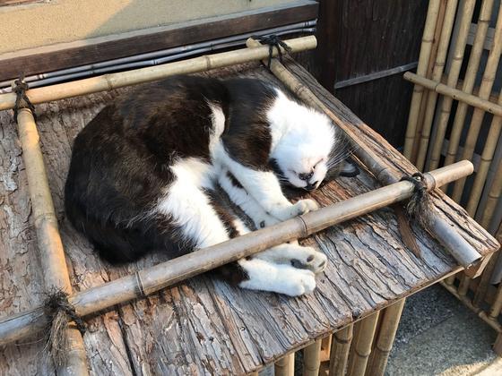 八坂の猫さま