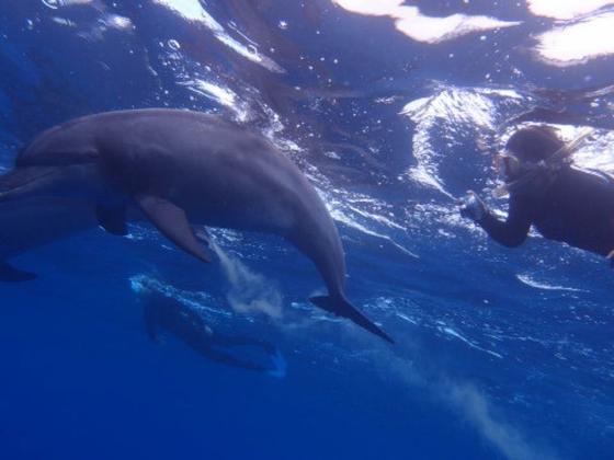 人間とイルカが良い関係を保つため、イルカには触らないというルールがあります