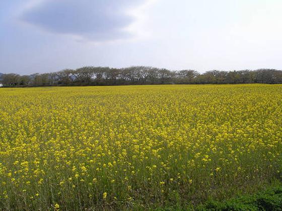 宮跡を彩る季節の花々