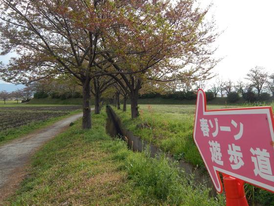 桜並木を抜けて…