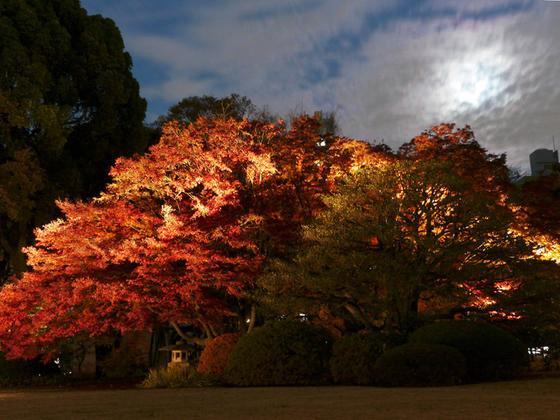 大木の紅葉