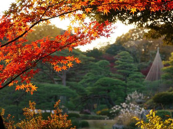 夕暮れの紅葉