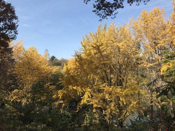 黄金色の木々