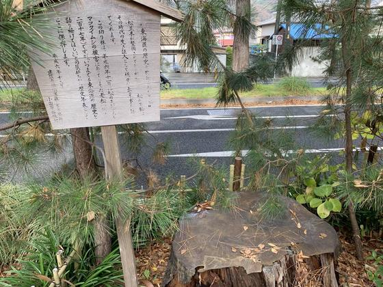 東海道の老松