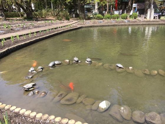 日向ぼっこの亀と鯉