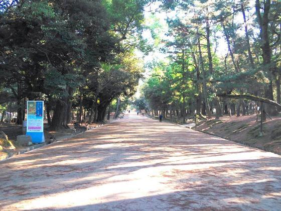 木が生い茂る参道
