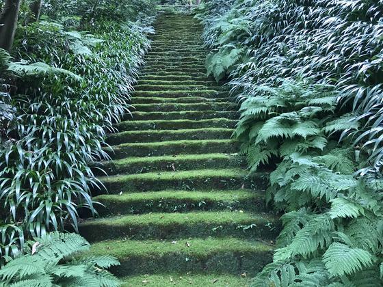 階段バーンw