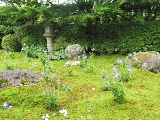 桔梗の花の咲く庭園