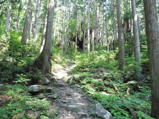株杉の森を散策スタート