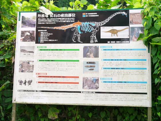実は恐竜と深い関係が‥