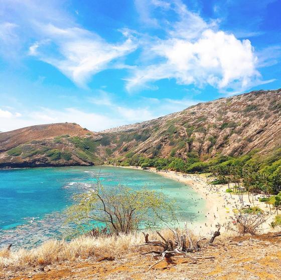 サンゴ礁とビーチのコントラストが綺麗!