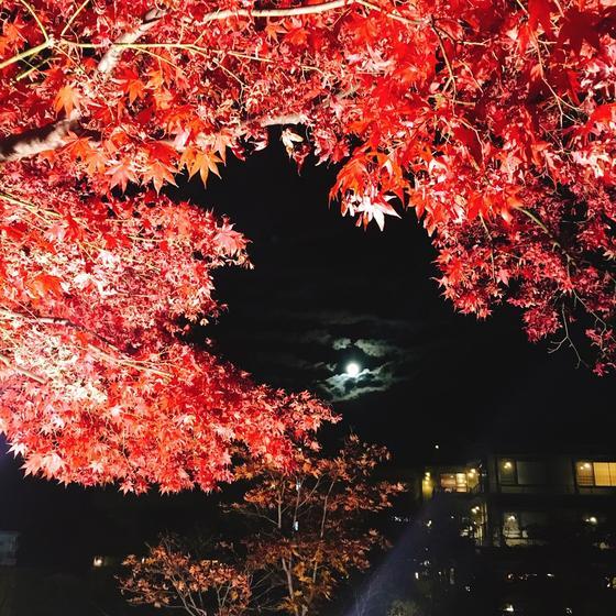 満月と紅葉
