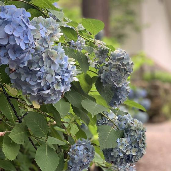 季節ごとの花や樹木