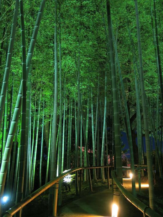 竹林までライトアップ
