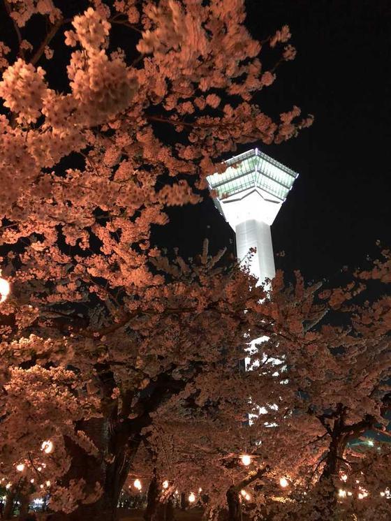 夜桜とタワー