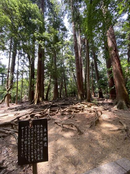 ◎木の根道