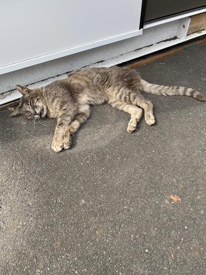 お昼寝中の猫🐈💤