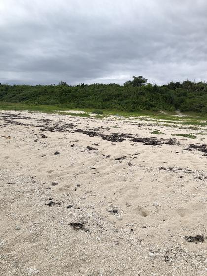 浜には 星の砂も