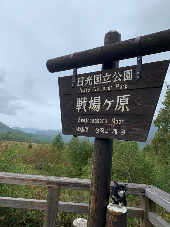 戦場ヶ原展望台