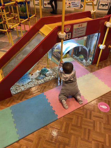 赤ちゃん水族館