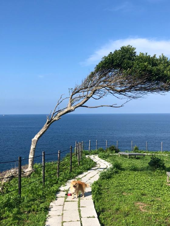 風で横流れの木