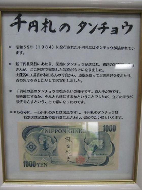 千円札のタンチョウ