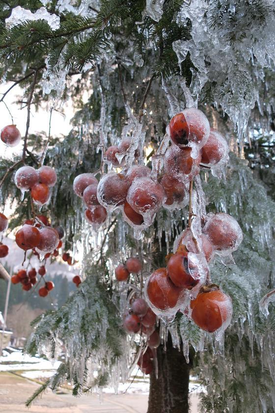 凍りついて固まる樹木