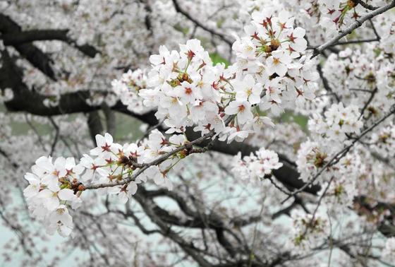 桜の撮影スポット