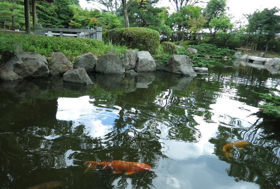 何故か豪華な鯉が。