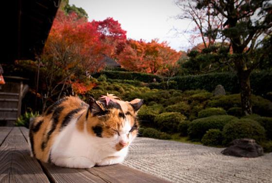 寺猫 ふくちゃん