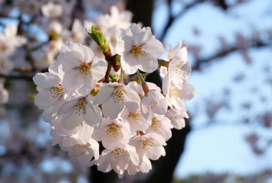 約800本の桜並木でのんびりタイム!