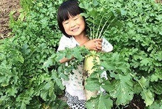 農業、自然の中で育っています