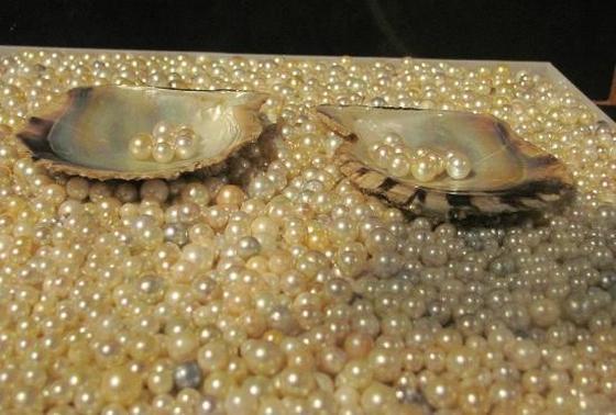 養殖真珠の技術は 世界を変えた