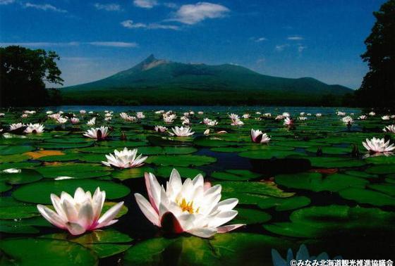 蓮と湖と山