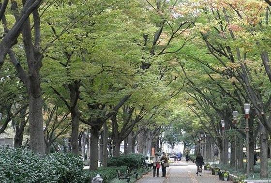 ケヤキ並木は可愛いペットとのお散歩コース