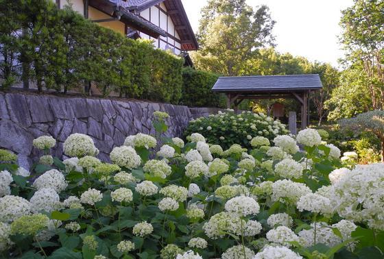 花の季節は様々な花が咲く