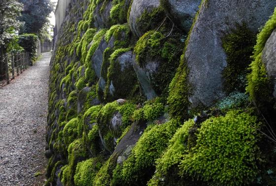 苔むせる石壁