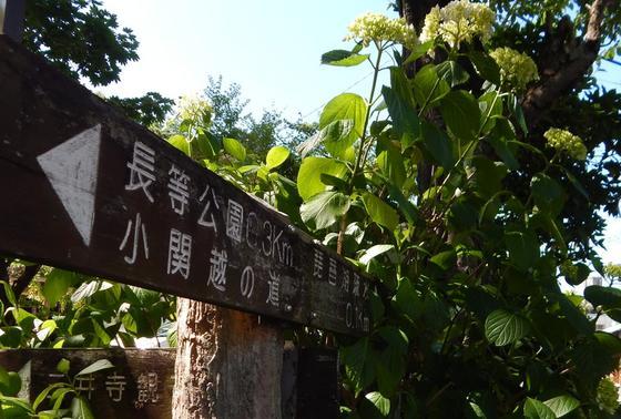 すぐ横から三井寺へも行けます