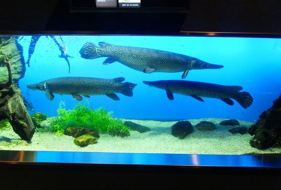 古代魚エリア