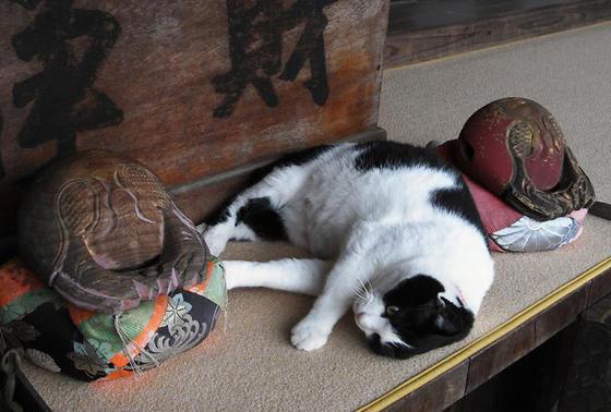 猫住職の大智院
