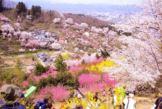 花見山の見晴らし