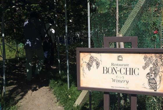 ボンシィク葡萄畑