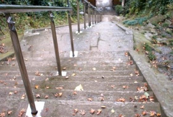 千葉県指定天然記念物「洲崎神社自然林」