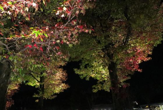 並木道~紅葉~