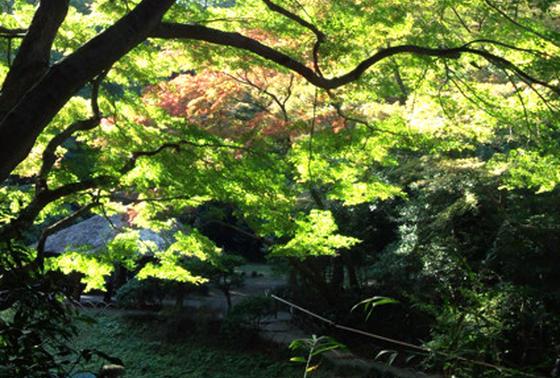有料ゾーン(庭園)