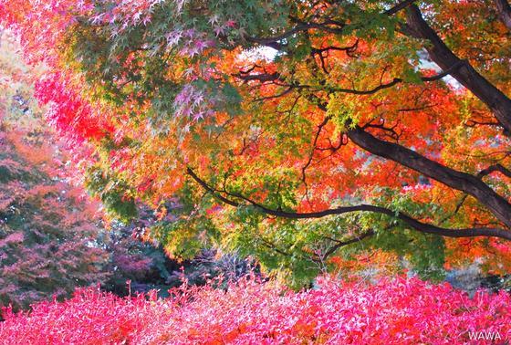 桜丘すみれば自然庭園