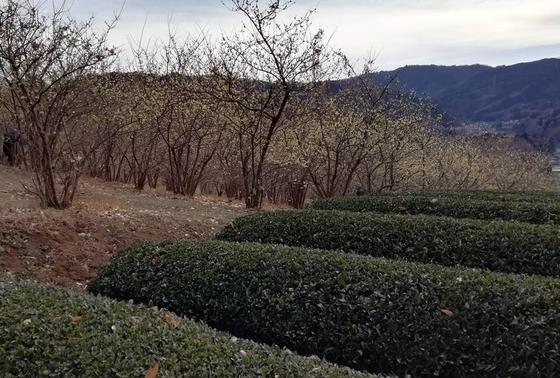茶畑も広がる山里